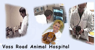 Voss Road Animal Hospital